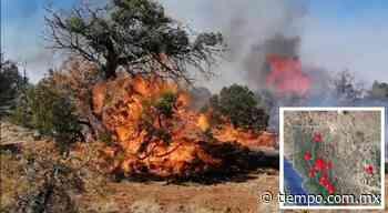 Incendio de Casas Grandes arrasó 2 mil hectáreas; reportan 5 nuevos - El Tiempo de México