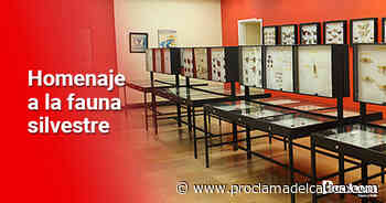 Exposición del Museo de Historia Natural en Santander de Quilichao - Proclama del Cauca