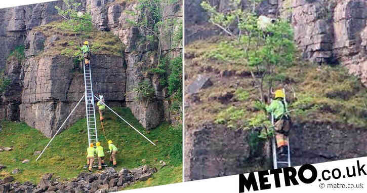 Firefighters scale cliff face to rescue sheep that got stuck