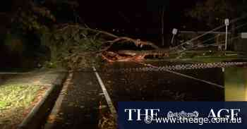 Wild winds: Fallen trees, thousands without power across Victoria