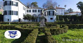 Casa Tait no Porto: duas árvores seculares de interesse público - TSF Online