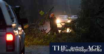 'Trees down everywhere': Fallen trees, flooding and thousands without power across Victoria