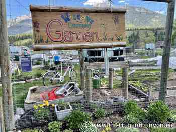 New gardeners add flavor at Canmore Community Garden - The Crag and Canyon