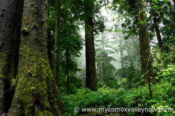 'We have to do something to stop this': Courtenay to rally for old-growth forests - My Comox Valley Now
