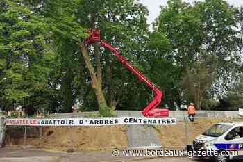 Après le Carnage Environnemental à Talence - Bordeaux Gazette