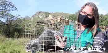 No Morro Sapucaia, um santuário para os animais resgatados na região - Jornal NH