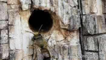 Nienburg: Bienen bei der Bundeswehr - kreiszeitung.de