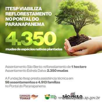 Fundação Itesp viabiliza ações de reflorestamento no Pontal do Paranapanema - Portal do Governo do Estado de São Paulo