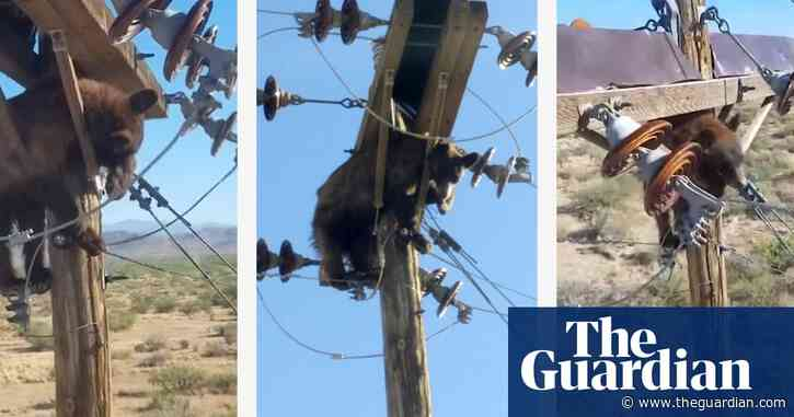 There's a bear in there: animal gets stuck up Arizona power pole – video