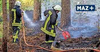 Herzberg: Wieder brannte der Wald unweit von Vielitzsee - Brandstiftung - Märkische Allgemeine Zeitung