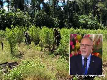 Desde Naciones Unidas revelan que en Nariño se redujeron los cultivos de uso ilícito - TuBarco