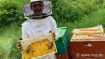 50 Prozent weniger Frühtracht: Bescheidene Honigernte: Den Bienen in Melle ist es zu kalt und zu nass - NOZ