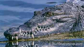 Dos turistas inglesas fueron atacadas por un cocodrilo en Puerto Escondido - Plumas Atómicas