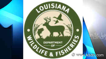 Agents Cite Gibson Man for Deer Hunting Violations in Terrebonne Parish - FOX 15