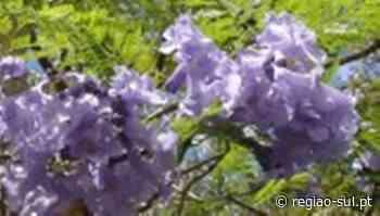 Vão ser plantadas mais 375 árvores no concelho de Faro - Região Sul