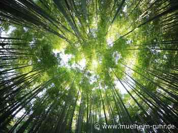 Waldfunktionen
