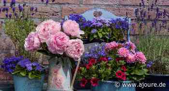 Die besten Blumen, um dein Zuhause zu dekorieren - AJOURE.de - Das Mode, Beauty, People und Lifestyle Magazin