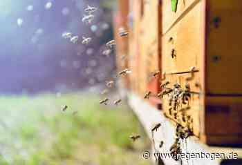 Eberbach: Bienenstock geplündert - Regenbogen