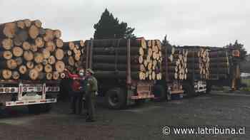 Incautan cinco camiones con madera robada en pleno centro de Concepción - Diario La Tribuna