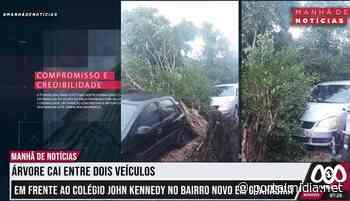Árvore cai entre veículos no bairro novo em Guarabira/PB - PortalMidia