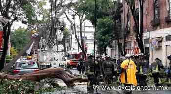 Árbol cae sobre autos y poste de luz en Santa María La Ribera - Excélsior