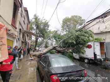 Lluvia tira árbol en Santa María la Ribera - UnomásUno