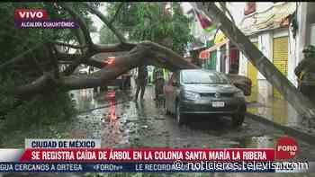 Cae árbol en la colonia Santa María La Ribera, CDMX - Noticieros Televisa
