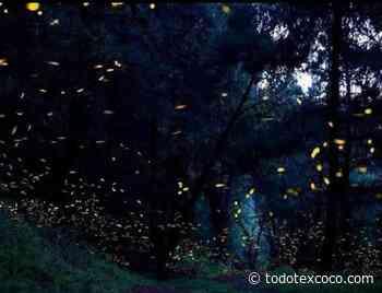 Inicia temporada de avistamiento de luciérnagas en la región volcanes. - Noticias de Texcoco