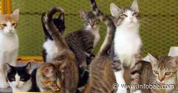 Video | En extrañas circunstancias se presentó un traslado de gatos de Villavicencio a Bogotá - infobae