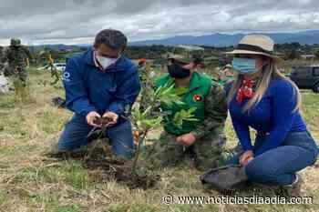 Sembraron 3500 árboles para la restauración del ecosistema en Chía, Cundinamarca - Noticias Día a Día