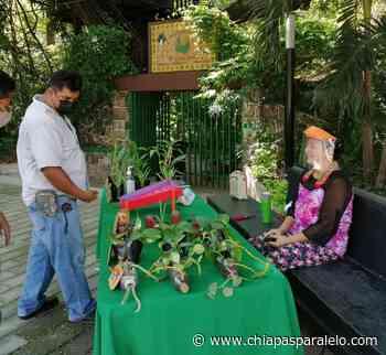 Jardín botánico festeja día mundial del medio ambiente - Chiapasparalelo
