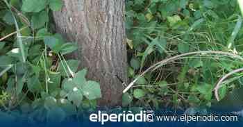 Ferrovial intensifica la lucha contra las plagas de palmeras y olmos en Burriana - elperiodic.com