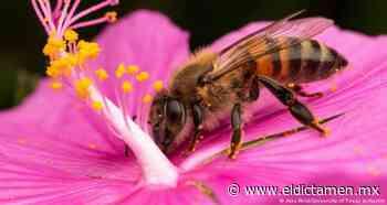 Tu jardín es un hábitat de polinizadores - El Dictamen