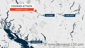 Cougar attacks 10-year-old boy near Lillooet, dog leaps into action - News 1130