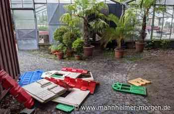 Mehr Vandalismus wegen Corona? - Ladenburg - Nachrichten und Informationen - Mannheimer Morgen