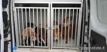 Corbetta (VIDEO): nessun cane microchippato e vaccinato al campo rom - Ticino Notizie