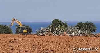 Tavira: Movimento denuncia abate de árvores em obra já embargada - Região Sul