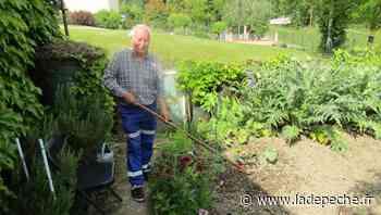 """Didier cultive un potager dans son jardin à Moissac : """"J'aime avoir des légumes bios, sans engrais ni produits - LaDepeche.fr"""