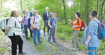 In Laubach für den guten Zweck Waldbaden gehen - Gießener Anzeiger