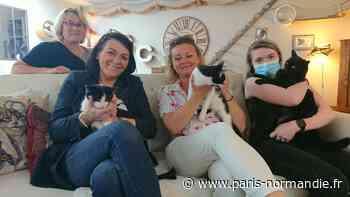 VIDÉO. Le premier « bar à chats » de Vernon ouvrira le 12 juin 2021 - Paris-Normandie