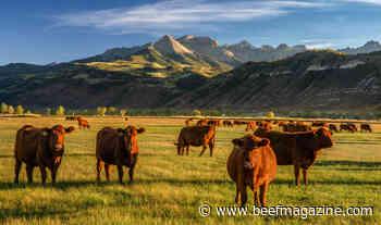 Cargill joins U.S. CattleTrace program