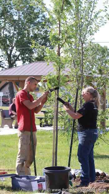 Granum society plants trees at veterans' memorial | Fort Macleod GazetteFort Macleod Gazette - Macleod Gazette Online