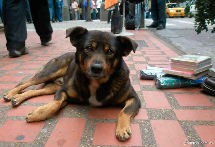 La política de protección animal en Valledupar, un paso adelante como sociedad - ElPilón.com.co