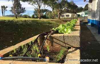 Educação : Escola Castelhano conta com projeto de Horta Sustentável - Caçador Online