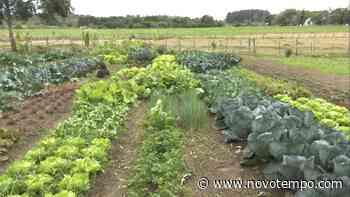 Casal cultiva verduras e clientes podem colher direto da horta - TV Cachoeira