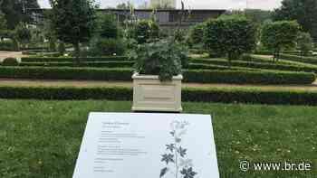 """""""Heilende Gifte"""" in Ansbach: Ausstellung zu Giftpflanzen - BR24"""