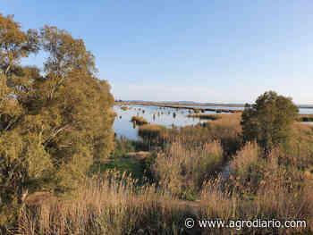 El pato más amenazado de Europa contará con un santuario de 55 hectáreas en el Parque de El Hondo - Agrodiario