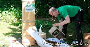 Neues Bienenvolk im Naturlehrgarten in Raunheim - Wiesbadener Kurier