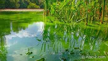 Blue-green algae toxins detected in Orange River at Manatee Park - NBC2 News