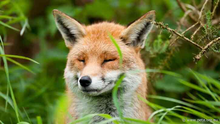 History in the Making! Israel the First Country to Ban Fur